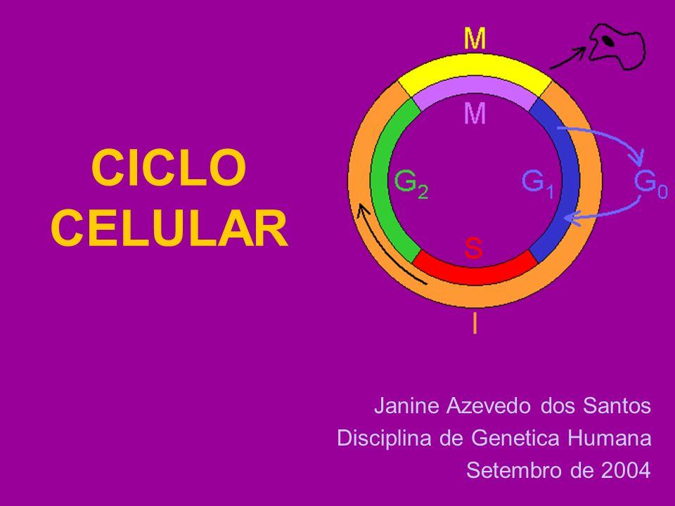 CICLO CELULAR Janine Azevedo dos Santos Disciplina de Genetica Humana