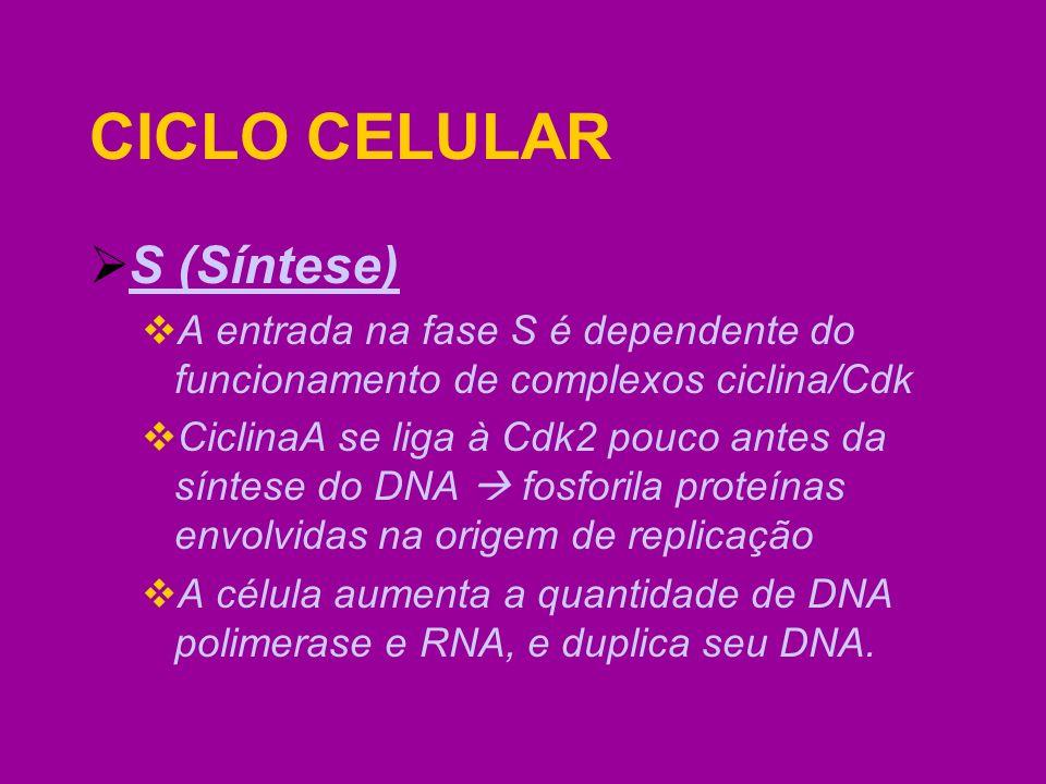 CICLO CELULAR S (Síntese)
