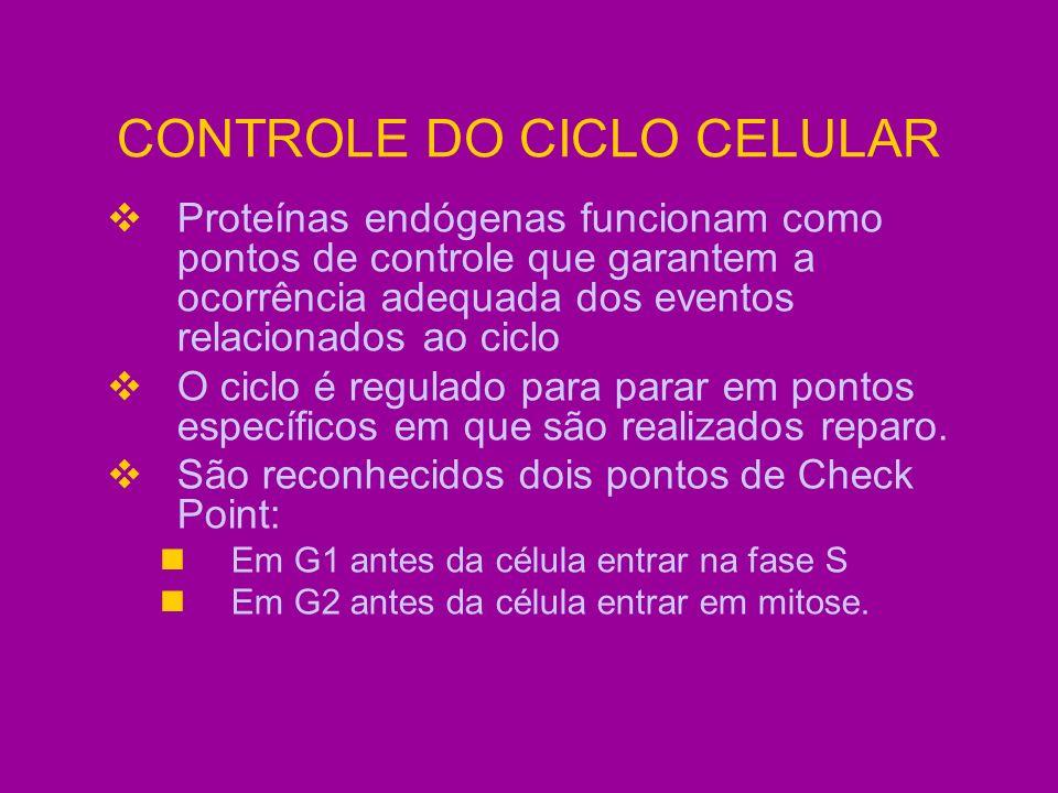 CONTROLE DO CICLO CELULAR