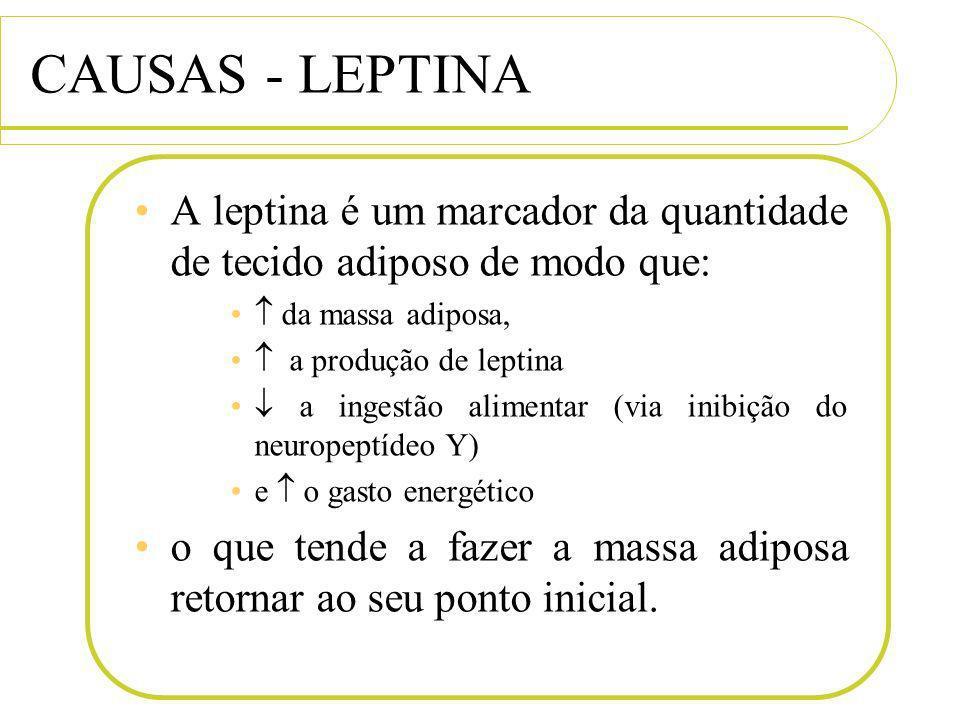 CAUSAS - LEPTINA A leptina é um marcador da quantidade de tecido adiposo de modo que:  da massa adiposa,
