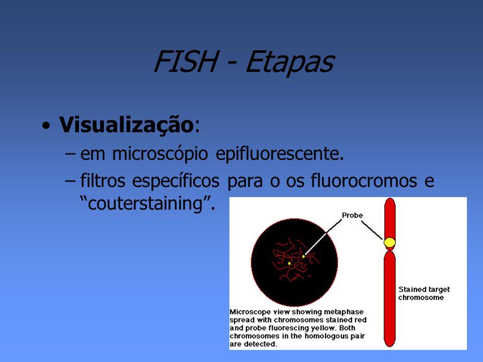 FISH - Etapas Visualização: em microscópio epifluorescente.