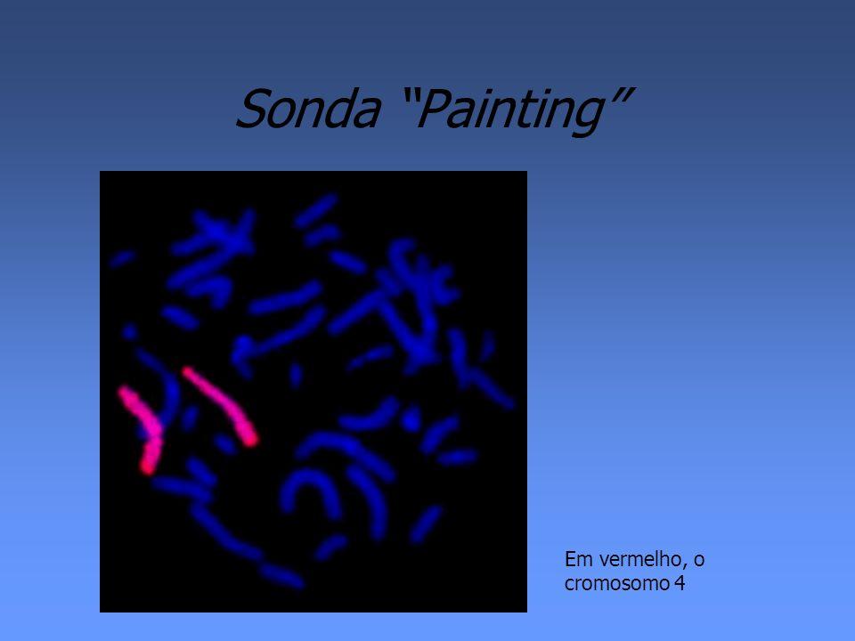 Sonda Painting Em vermelho, o cromosomo 4