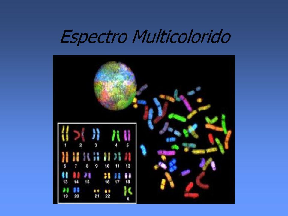 Espectro Multicolorido