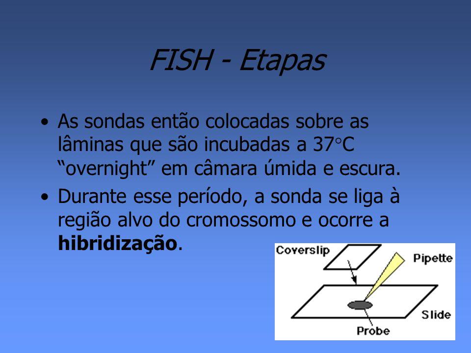 FISH - Etapas As sondas então colocadas sobre as lâminas que são incubadas a 37C overnight em câmara úmida e escura.
