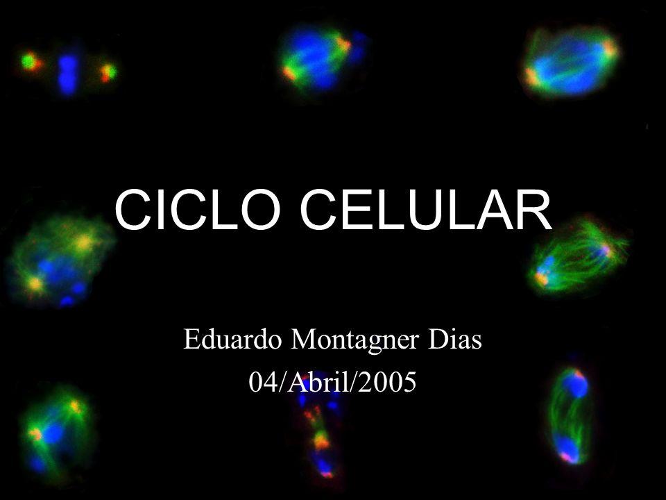Eduardo Montagner Dias 04/Abril/2005