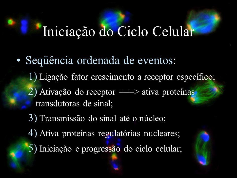 Iniciação do Ciclo Celular