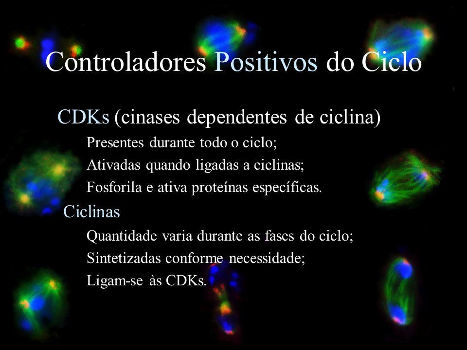 Controladores Positivos do Ciclo