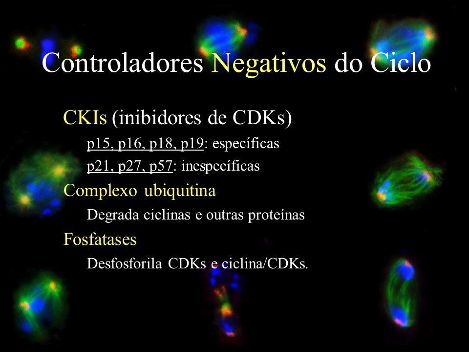 Controladores Negativos do Ciclo