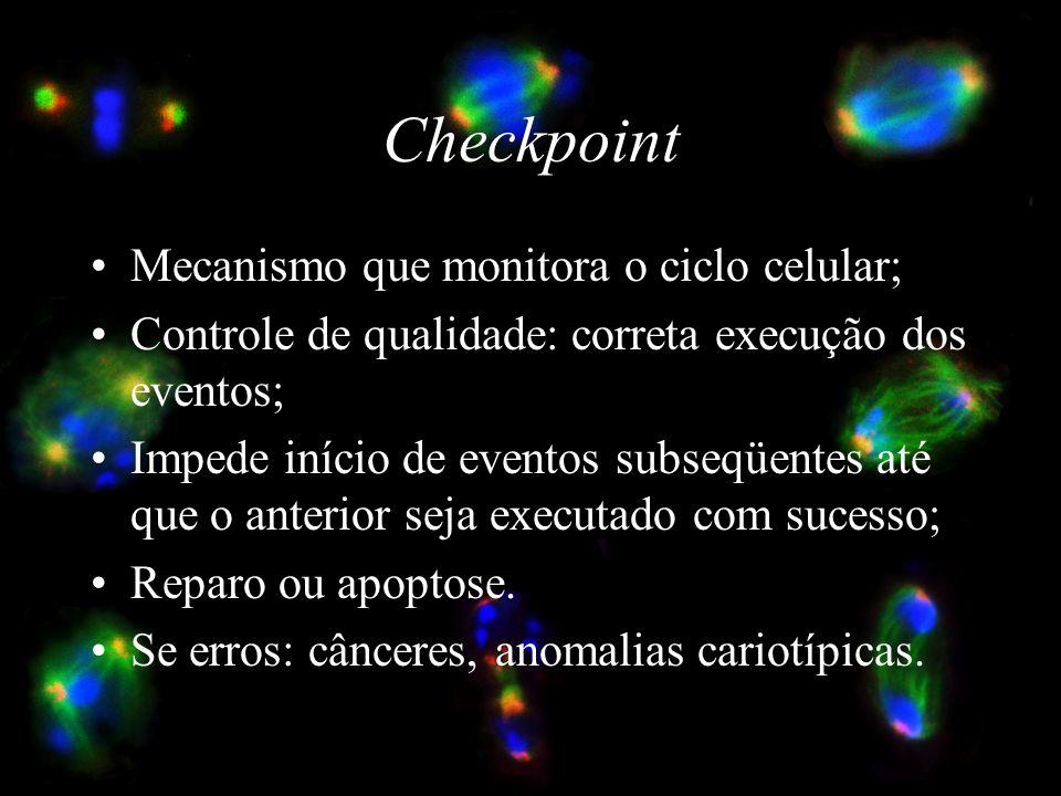 Checkpoint Mecanismo que monitora o ciclo celular;