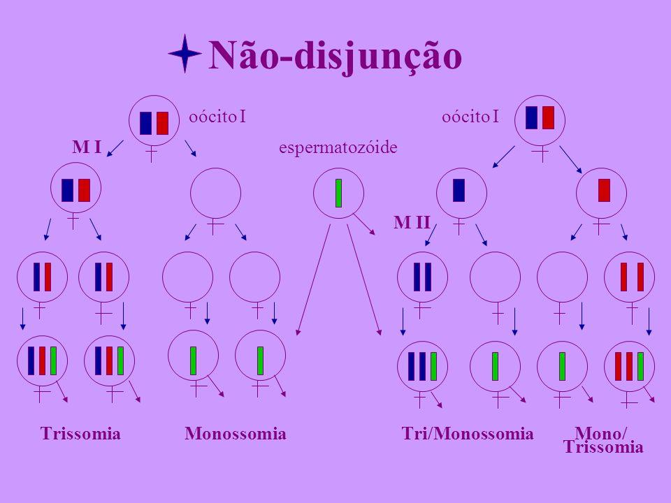 Não-disjunção oócito I oócito I M I espermatozóide M II