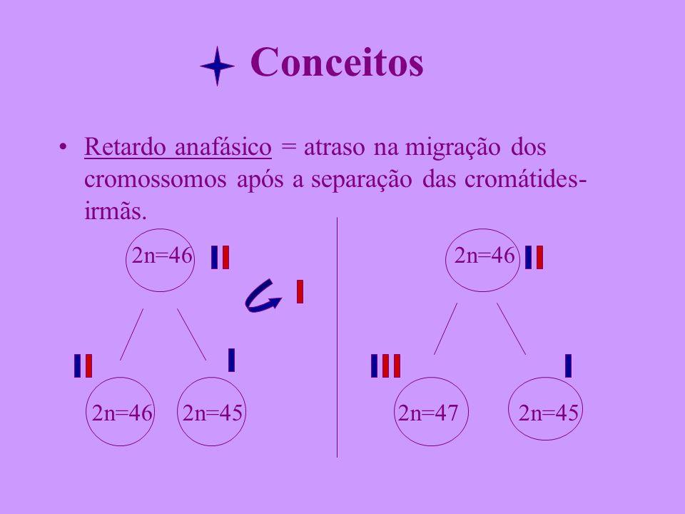 Conceitos Retardo anafásico = atraso na migração dos cromossomos após a separação das cromátides-irmãs.