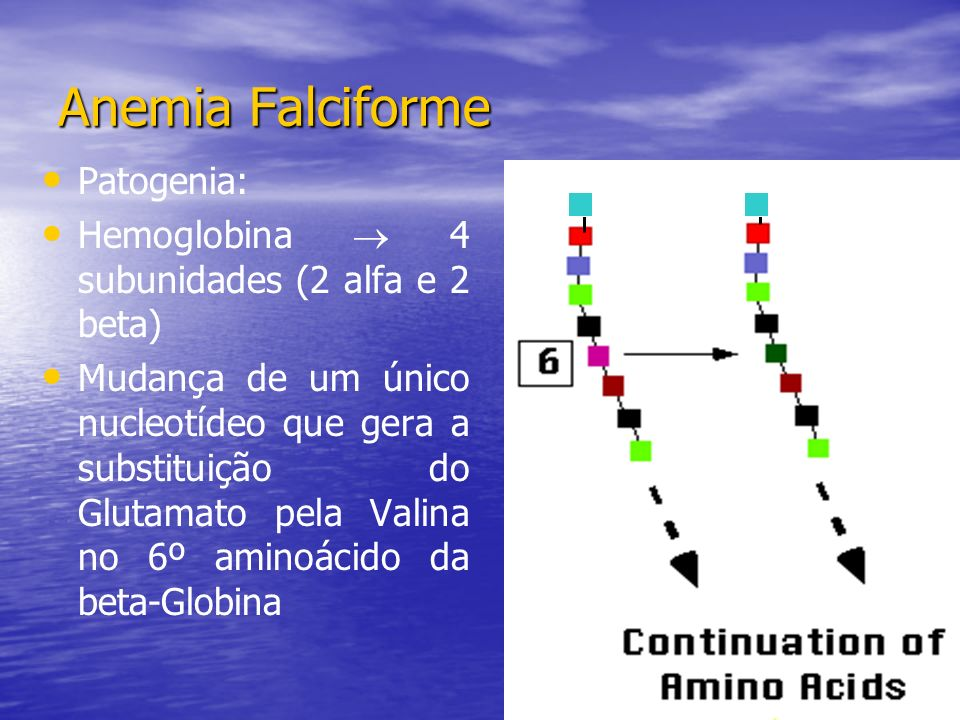 Anemia Falciforme Patogenia: