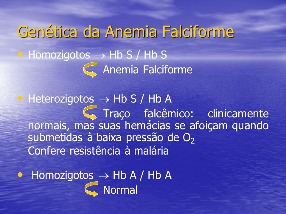 Genética da Anemia Falciforme