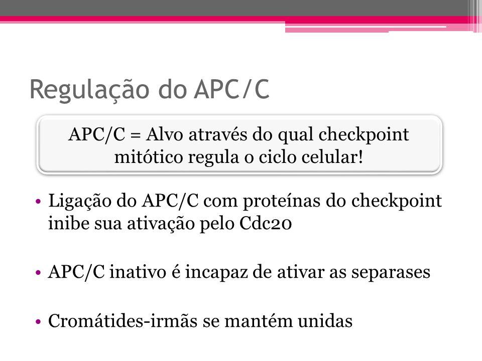 Regulação do APC/C APC/C = Alvo através do qual checkpoint mitótico regula o ciclo celular!
