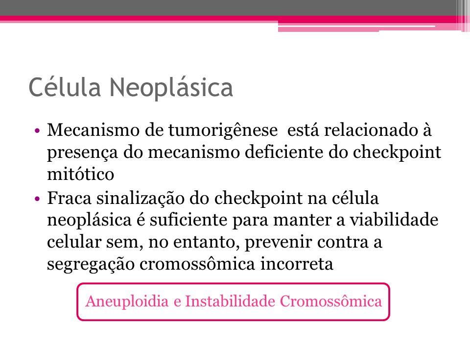 Célula NeoplásicaMecanismo de tumorigênese está relacionado à presença do mecanismo deficiente do checkpoint mitótico.