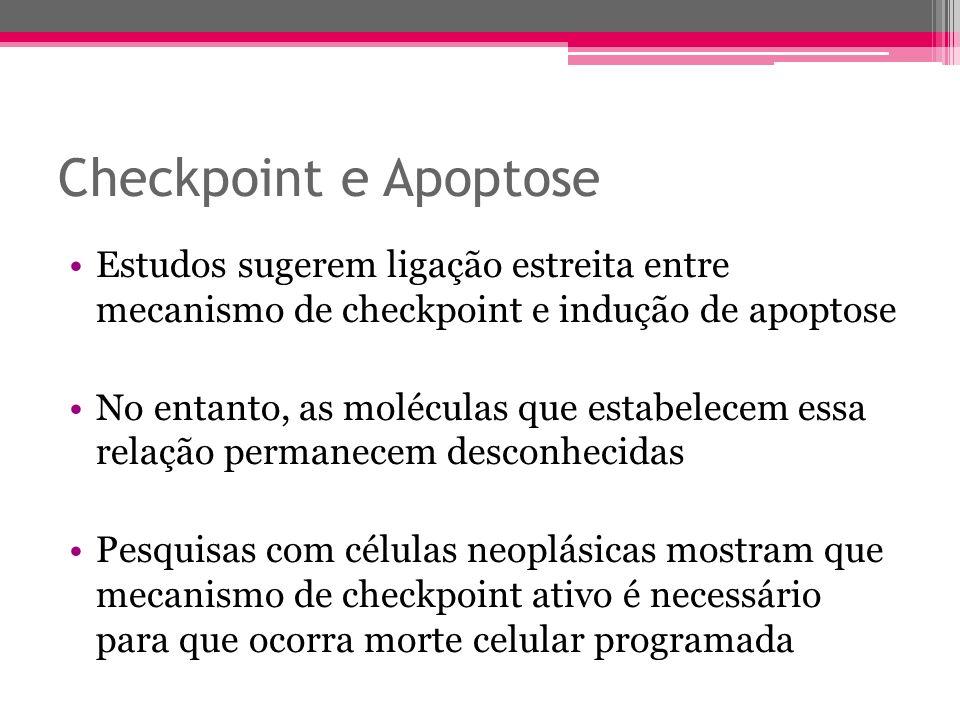 Checkpoint e Apoptose Estudos sugerem ligação estreita entre mecanismo de checkpoint e indução de apoptose.