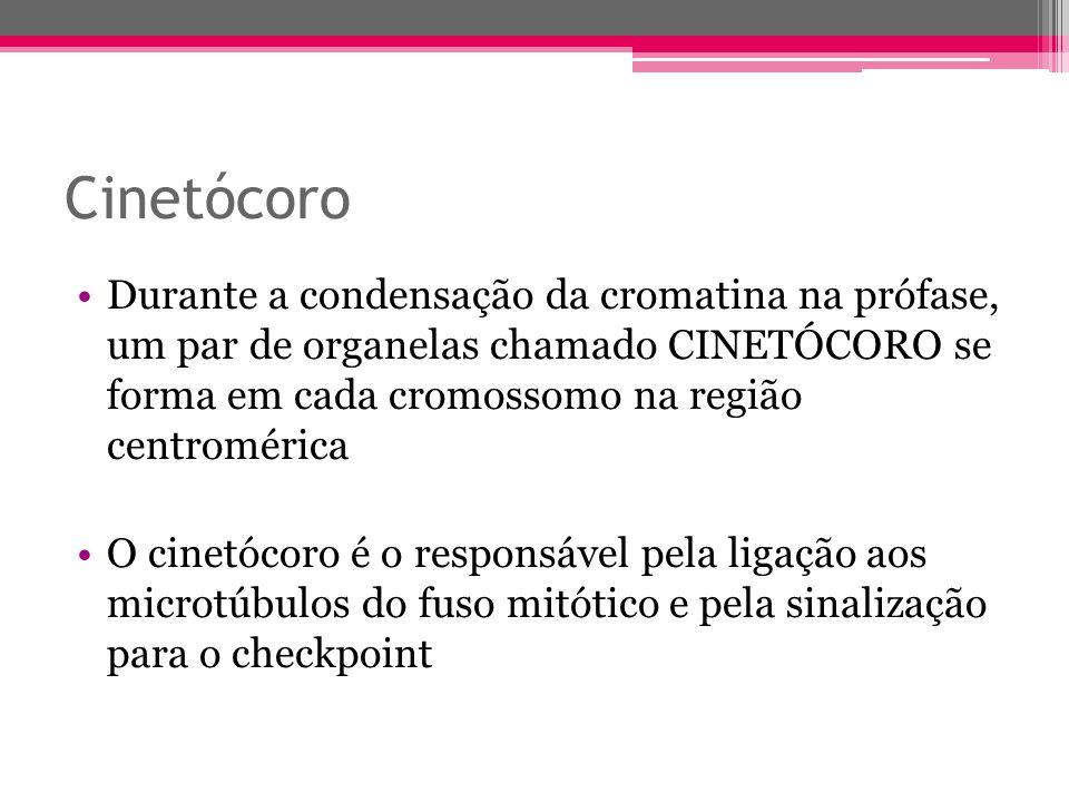 Cinetócoro