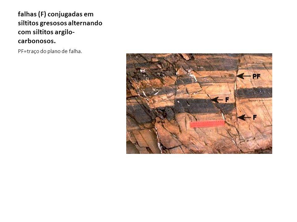 falhas (F) conjugadas em siltitos gresosos alternando com siltitos argilo-carbonosos.