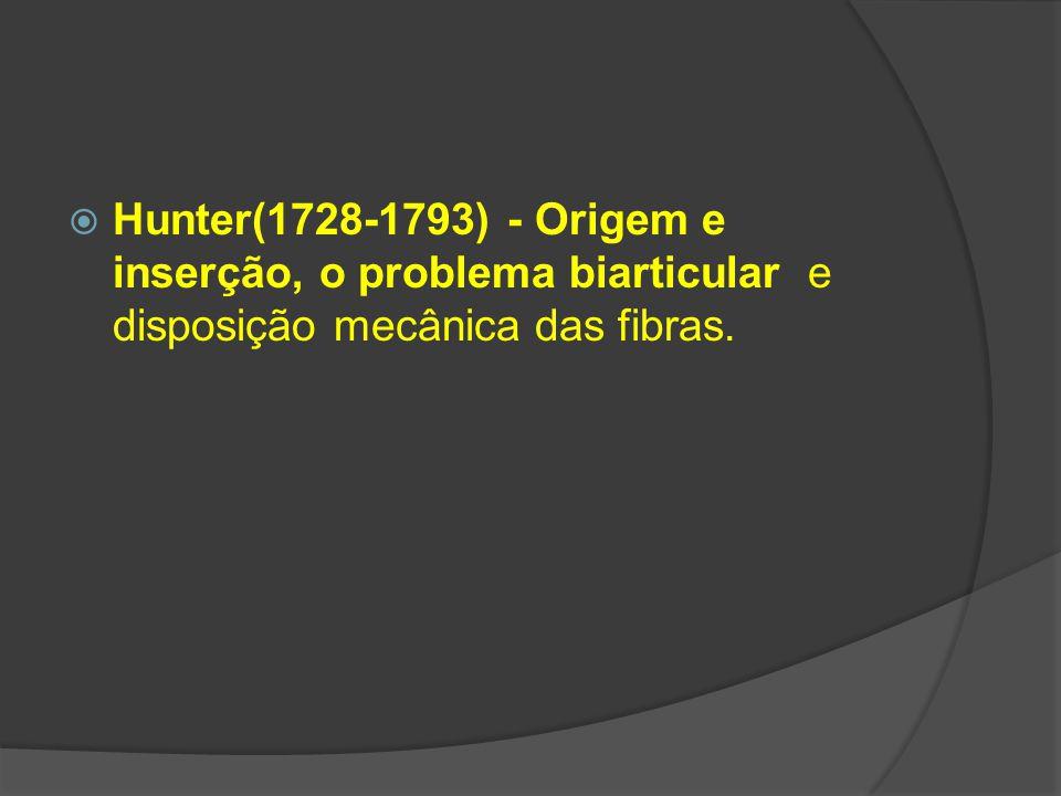 Hunter(1728-1793) - Origem e inserção, o problema biarticular e disposição mecânica das fibras.