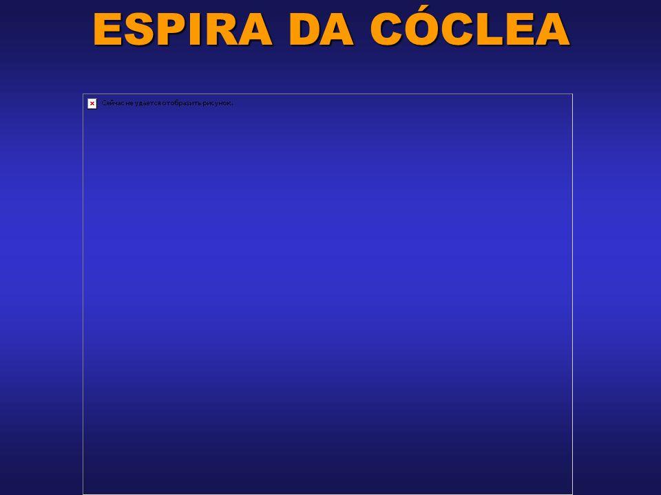 ESPIRA DA CÓCLEA
