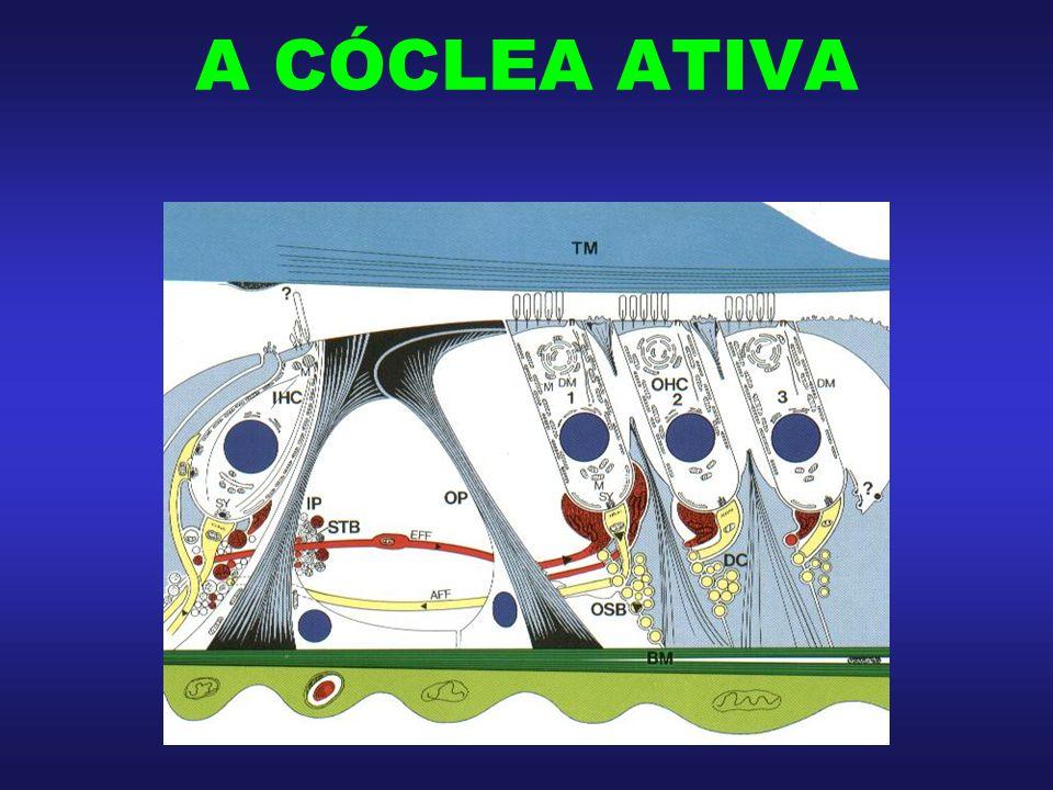 A CÓCLEA ATIVA