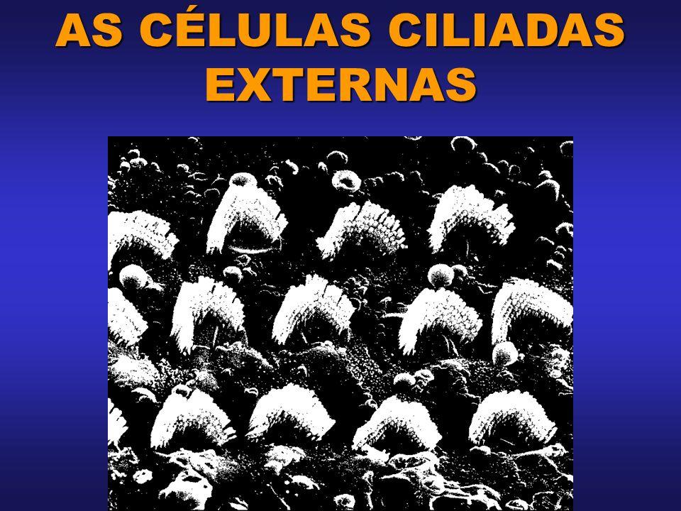AS CÉLULAS CILIADAS EXTERNAS