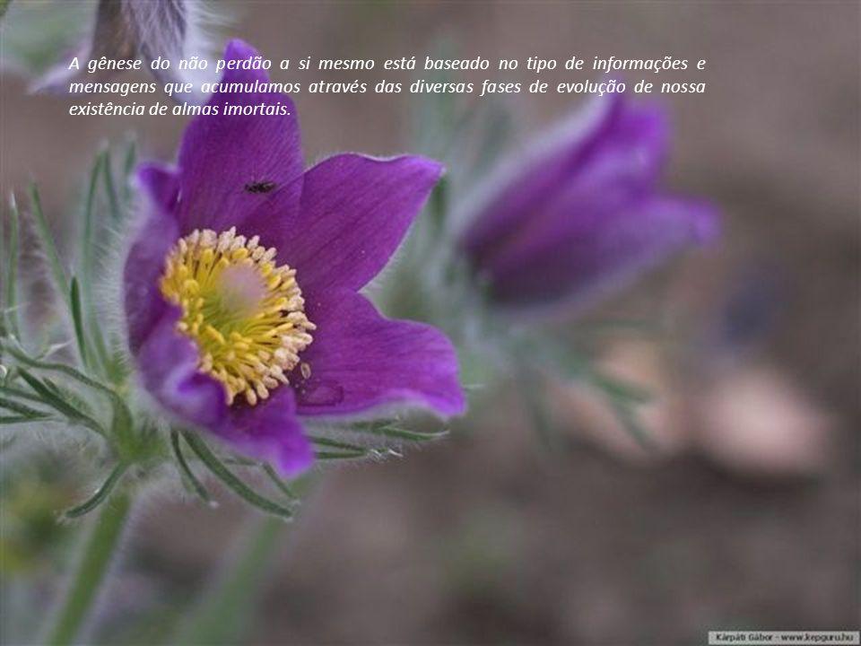 A gênese do não perdão a si mesmo está baseado no tipo de informações e mensagens que acumulamos através das diversas fases de evolução de nossa existência de almas imortais.