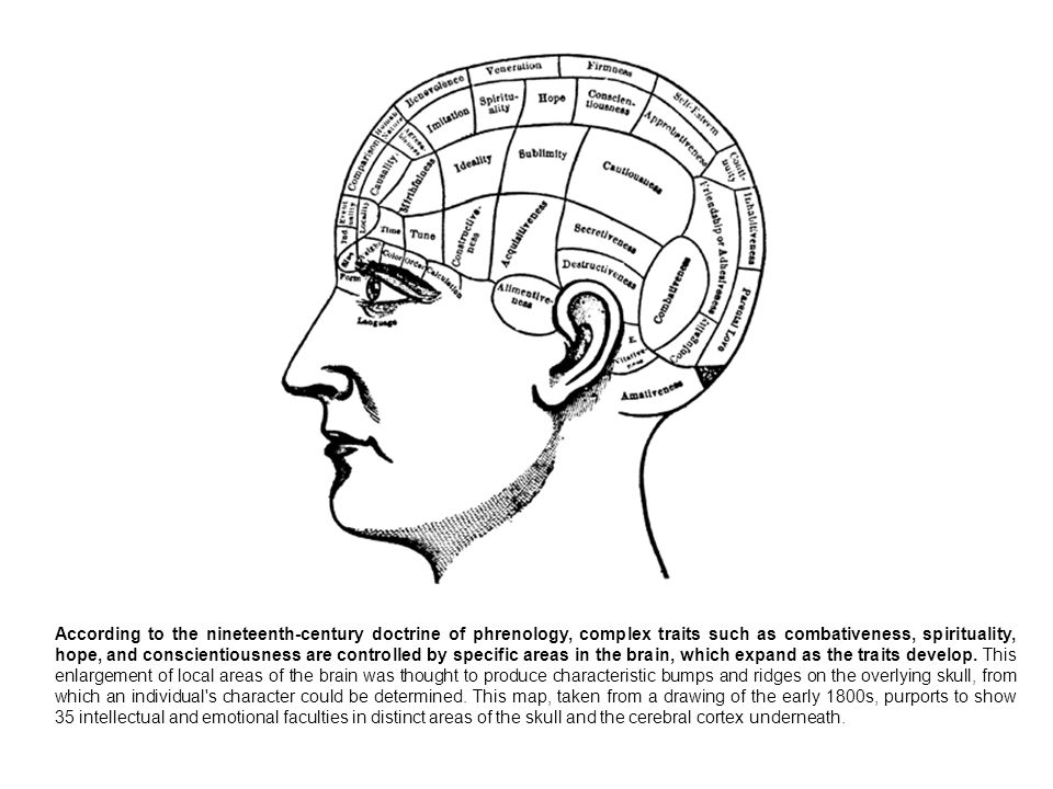 According to the nineteenth-century doctrine of phrenology, complex traits such as combativeness, spirituality, hope, and conscientiousness are controlled by specific areas in the brain, which expand as the traits develop.