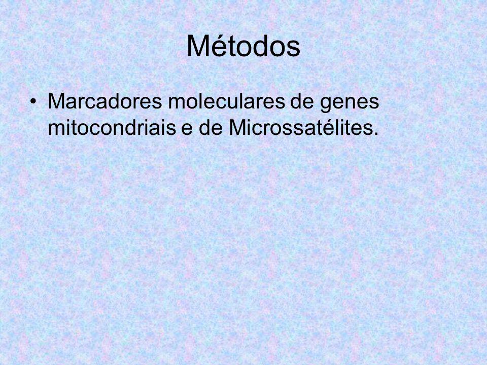 Métodos Marcadores moleculares de genes mitocondriais e de Microssatélites.