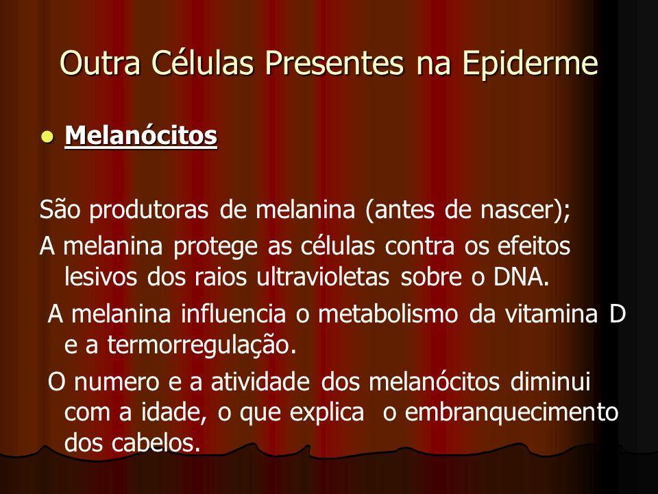 Outra Células Presentes na Epiderme
