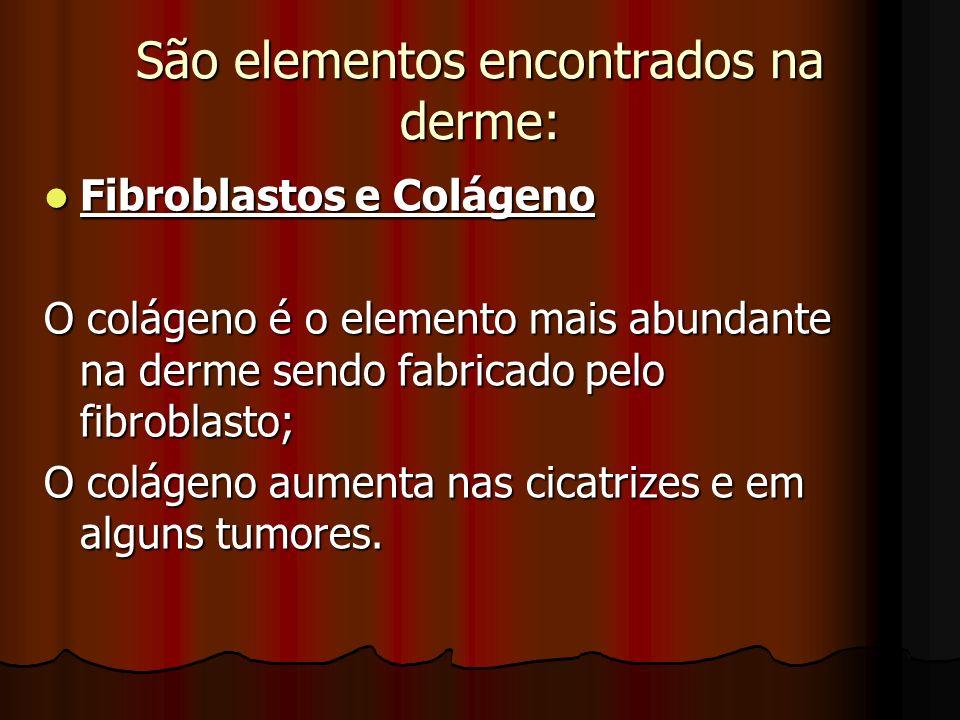 São elementos encontrados na derme:
