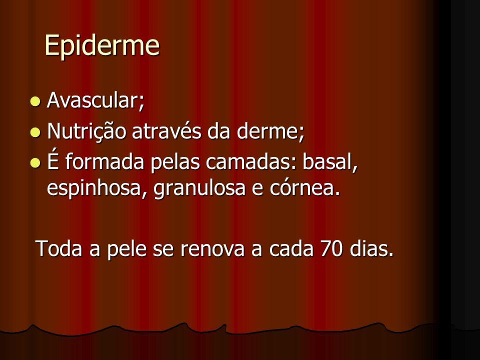 Epiderme Avascular; Nutrição através da derme;
