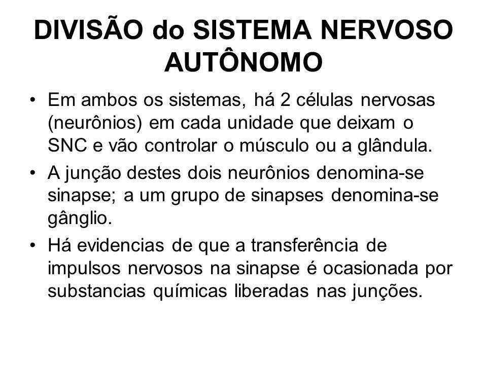 DIVISÃO do SISTEMA NERVOSO AUTÔNOMO
