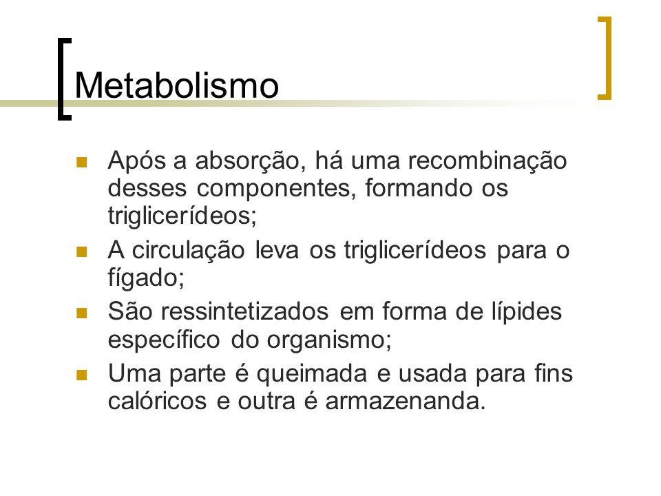 MetabolismoApós a absorção, há uma recombinação desses componentes, formando os triglicerídeos; A circulação leva os triglicerídeos para o fígado;
