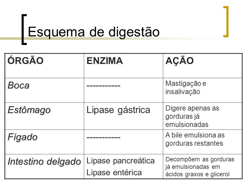 Esquema de digestão ÓRGÃO ENZIMA AÇÃO Boca ----------- Estômago