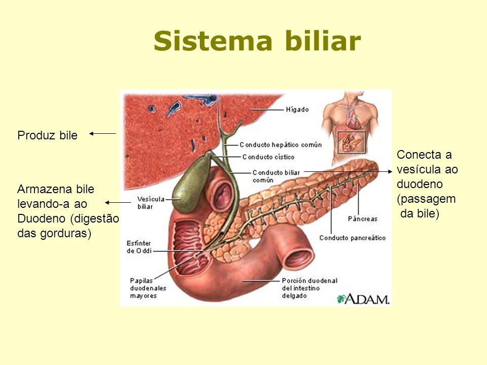 Sistema biliar Produz bile Conecta a vesícula ao duodeno (passagem