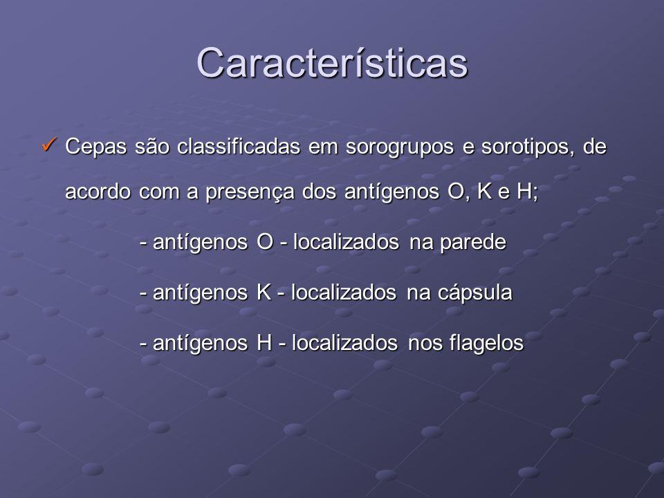 Características Cepas são classificadas em sorogrupos e sorotipos, de acordo com a presença dos antígenos O, K e H;