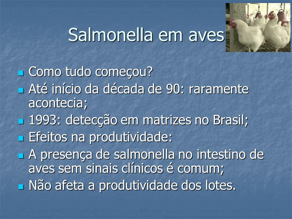 Salmonella em aves Como tudo começou