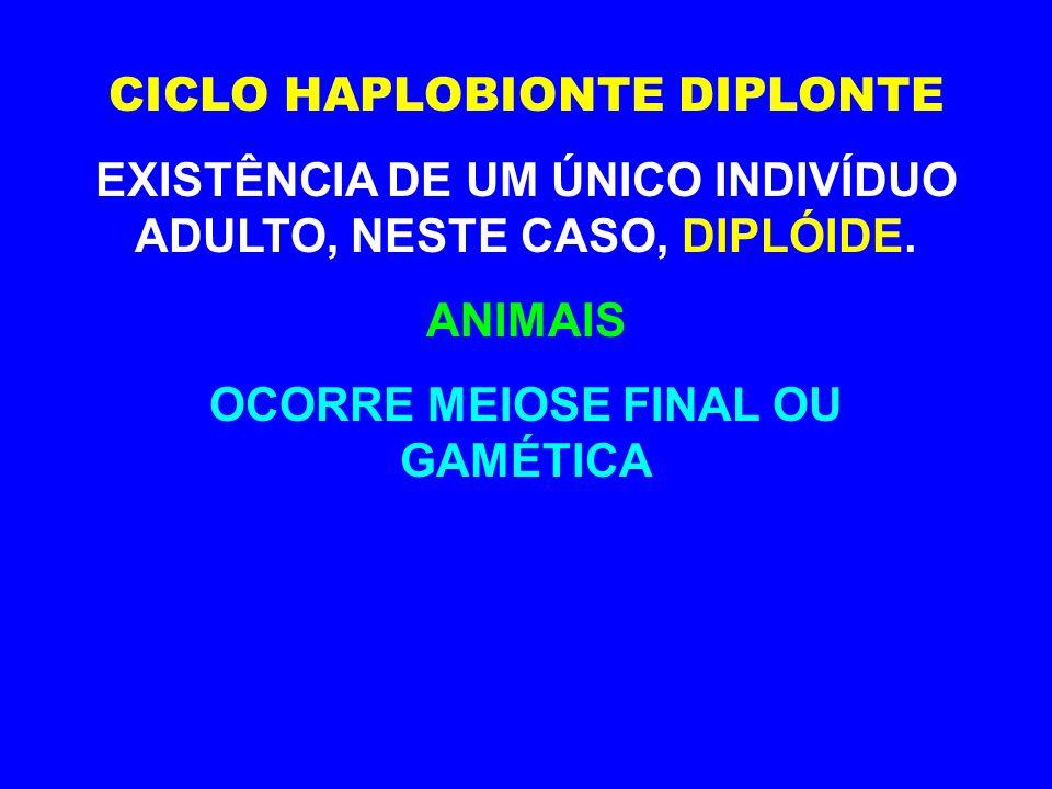 CICLO HAPLOBIONTE DIPLONTE