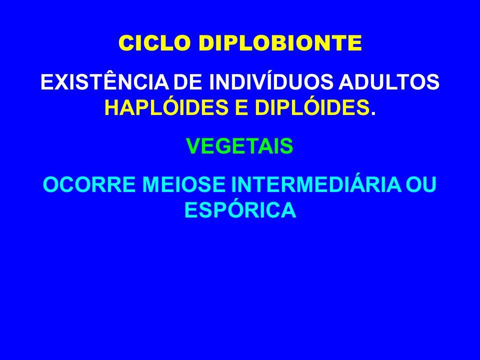 EXISTÊNCIA DE INDIVÍDUOS ADULTOS HAPLÓIDES E DIPLÓIDES.