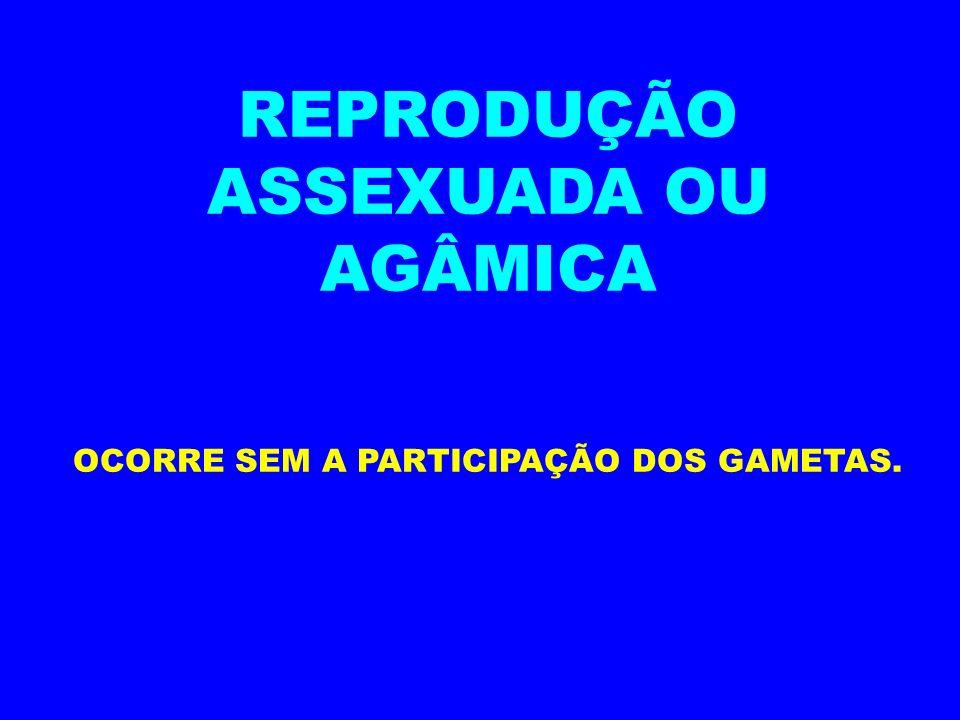 REPRODUÇÃO ASSEXUADA OU AGÂMICA OCORRE SEM A PARTICIPAÇÃO DOS GAMETAS.