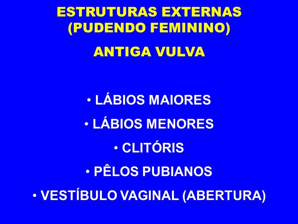 ESTRUTURAS EXTERNAS (PUDENDO FEMININO) VESTÍBULO VAGINAL (ABERTURA)