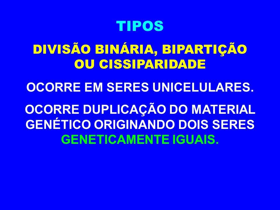 TIPOS DIVISÃO BINÁRIA, BIPARTIÇÃO OU CISSIPARIDADE