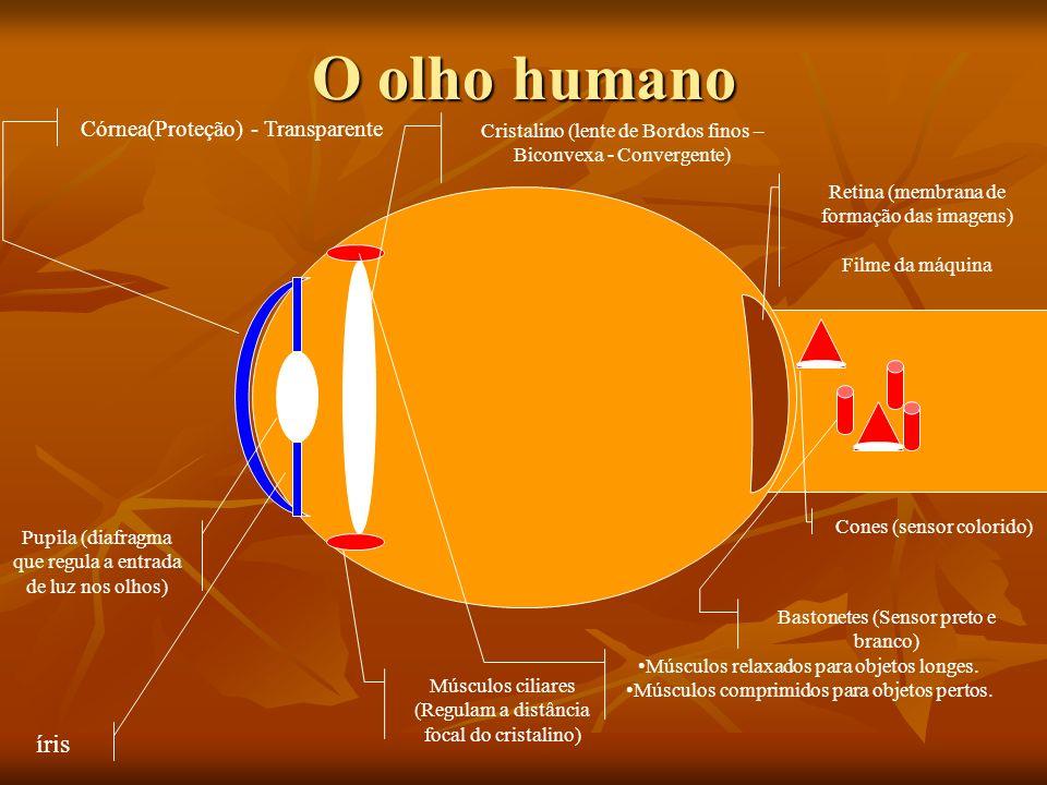 O olho humano íris Córnea(Proteção) - Transparente
