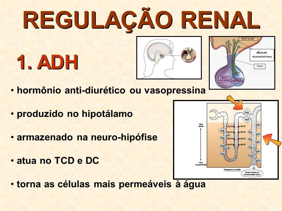 REGULAÇÃO RENAL 1. ADH hormônio anti-diurético ou vasopressina