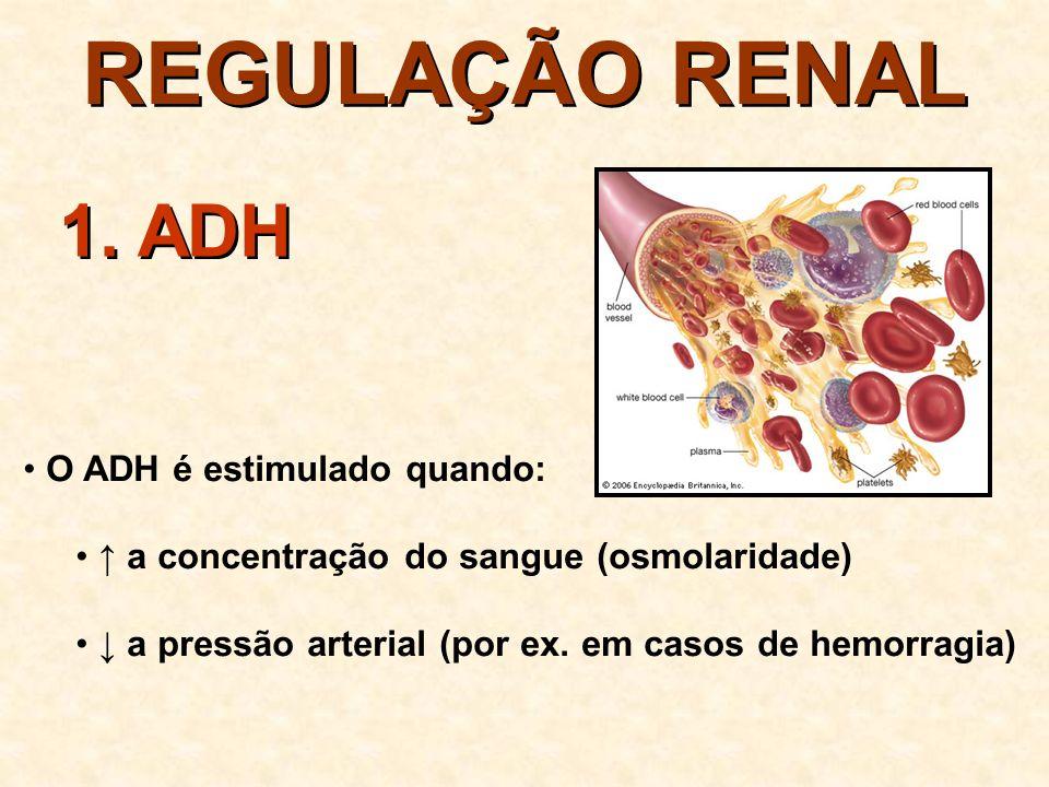 REGULAÇÃO RENAL 1. ADH O ADH é estimulado quando: