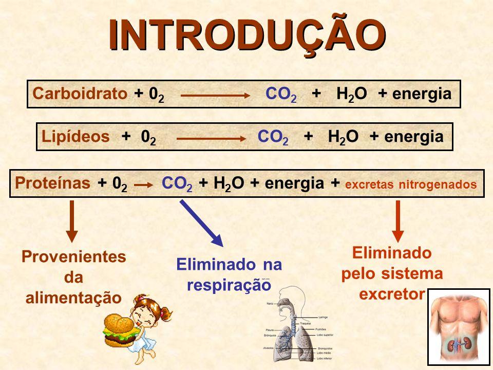 INTRODUÇÃO Carboidrato + 02 CO2 + H2O + energia