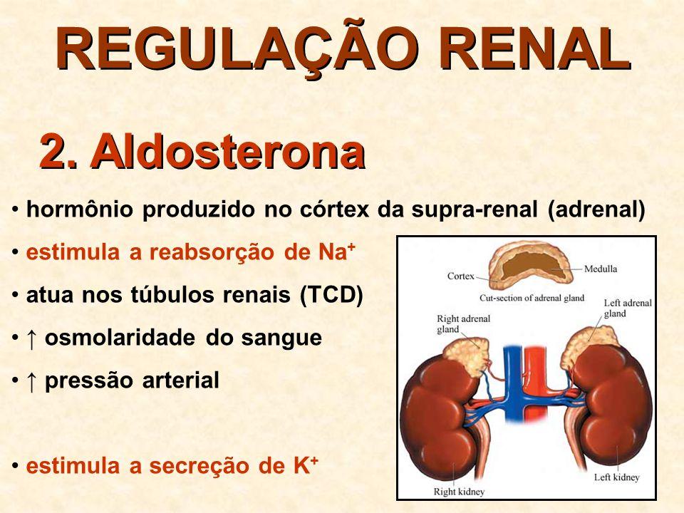REGULAÇÃO RENAL 2. Aldosterona