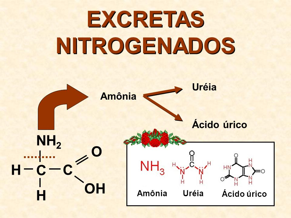EXCRETAS NITROGENADOS