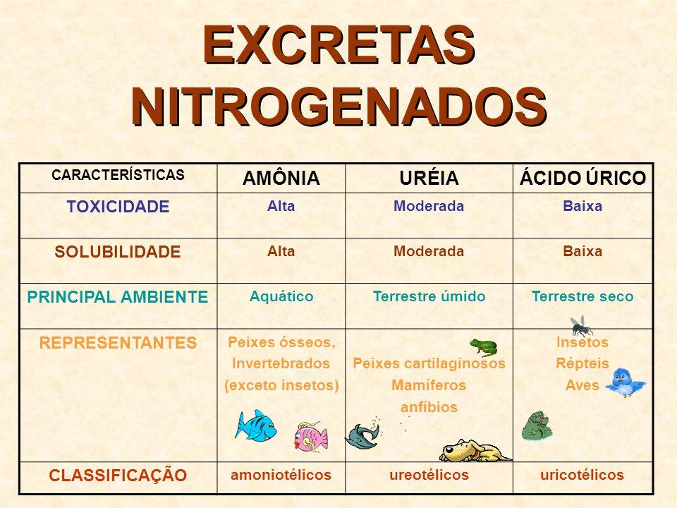 EXCRETAS NITROGENADOS Peixes cartilaginosos